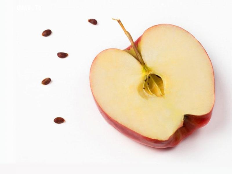 2 روش عالی برای کاشت هسته سیب در منزل + مرحله به مرحله