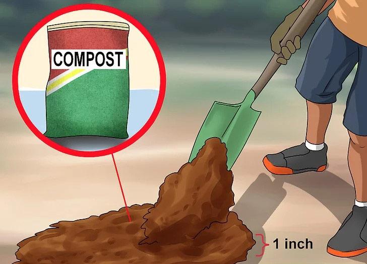 کمپوست را روی خاک پخش کنید
