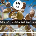 بهترین ارقام نهال بادام در ایران