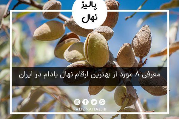 معرفی 8 مورد از بهترین ارقام نهال بادام در ایران