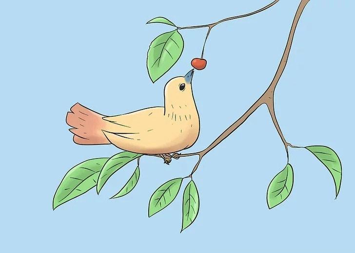 ترساندن پرندگان آفات درخت گیلاس و دورکردن آن ها