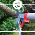 هرس کردن درخت بادام