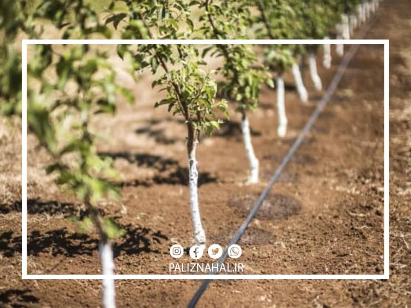 میزان آب مورد نیاز درخت گیلاس